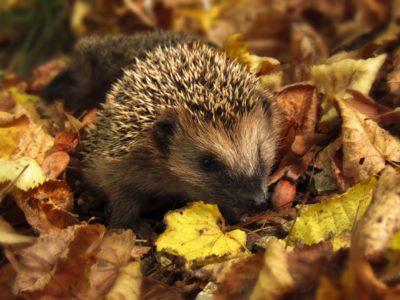 Growing the Future: Making Hedgehog Houses / Creu Cartref y Draenog
