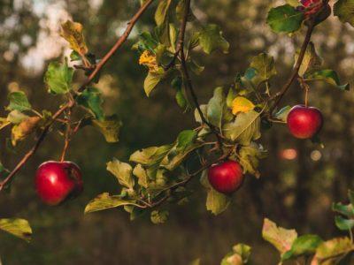 Growing the Future: Backyard Orchards Course / Cwrs Perllannau'r Iard Gefn