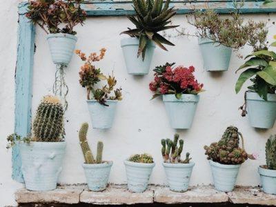 Growing The Future: Garden Design: Small Spaces Course