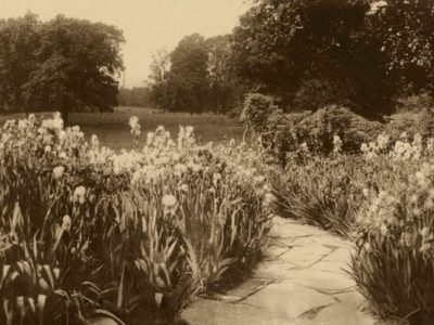 Inside Insole Court's Archive: Violet Insole's Award-Winning Passion for Irises