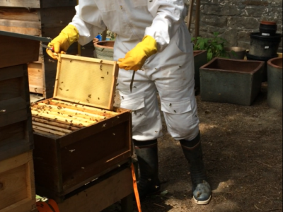 Insole Court's New Queen Bee