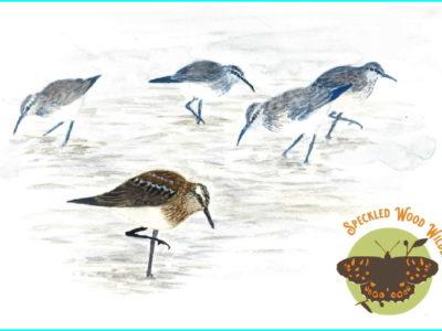 Wading Birds: Identification & Ecology