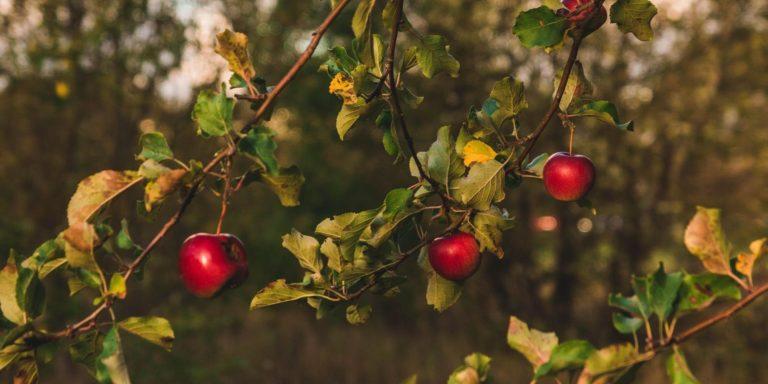 Promo image: Growing the Future: Backyard Orchards Course / Cwrs Perllannau'r Iard Gefn