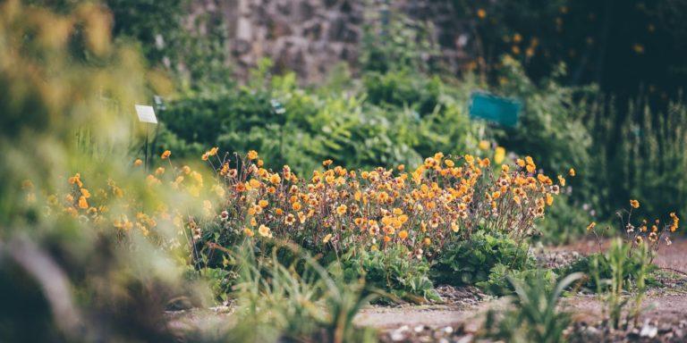 Promo image: Growing the Future: Garden Design: First Steps Course / Cwrs Cynllunio'r Ardd: Camau Cyntaf