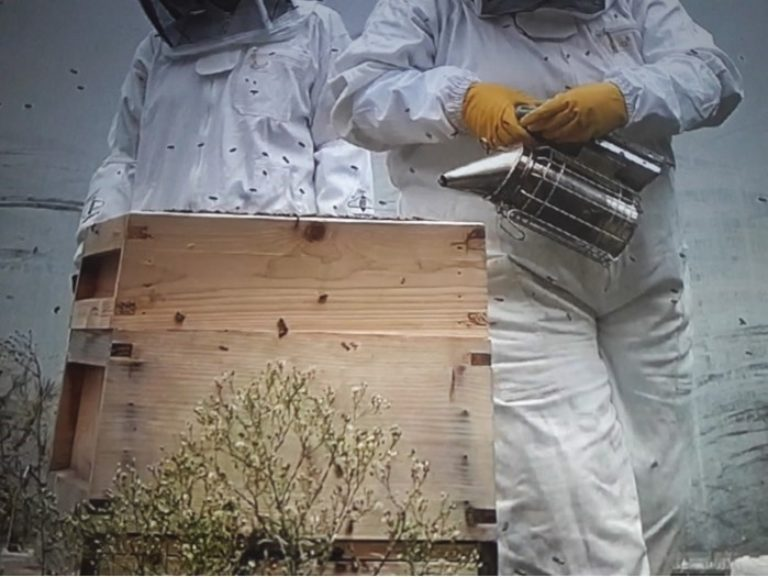 Promo image: Cardiff, Vale and Valleys Beekeeping Association monthly meeting